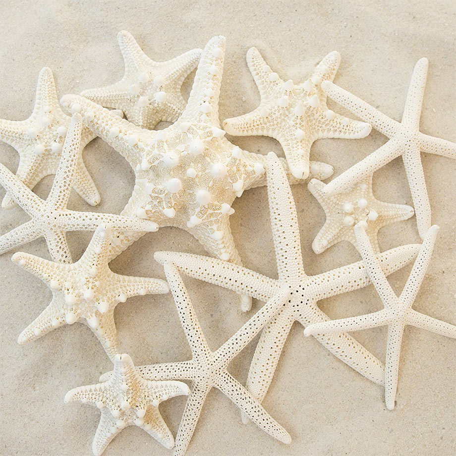 10 - Mixed White Starfish
