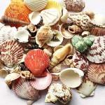 8 - Shells