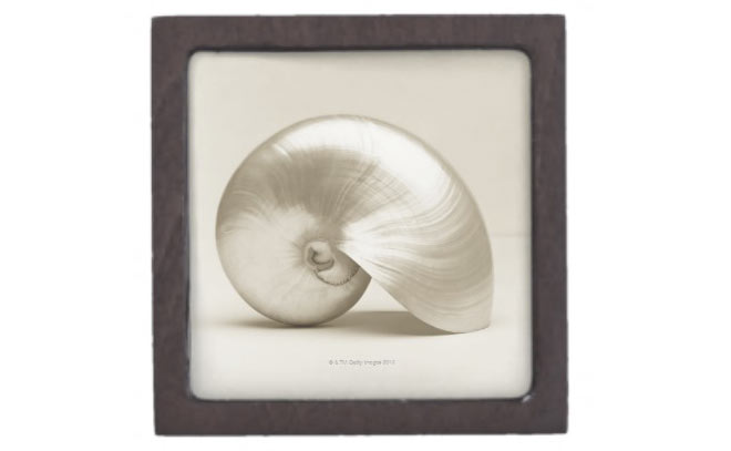 Nautilus shell keepsake box via Zazzle