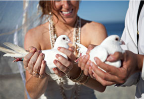 White dove release for weddings