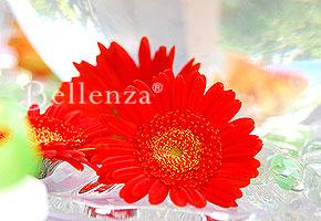 Gerbera daisy theme