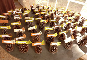 Pine Cone Place Cards Thanksgiving