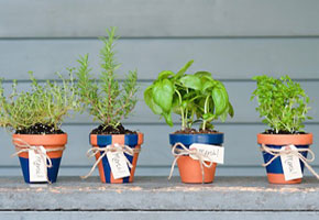 Mini potted herbs as eco-friendly favors