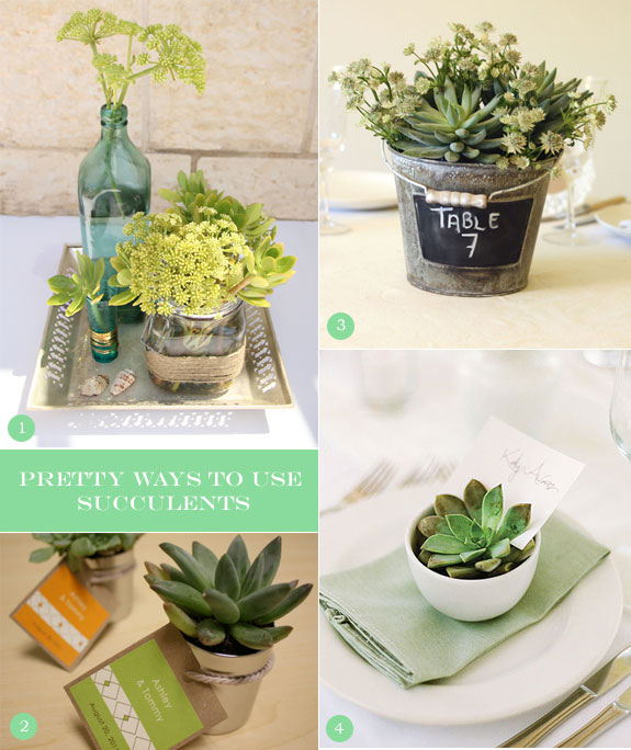Inspiration Board Of Ideas For Succulents