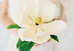 Single flower white bouquet
