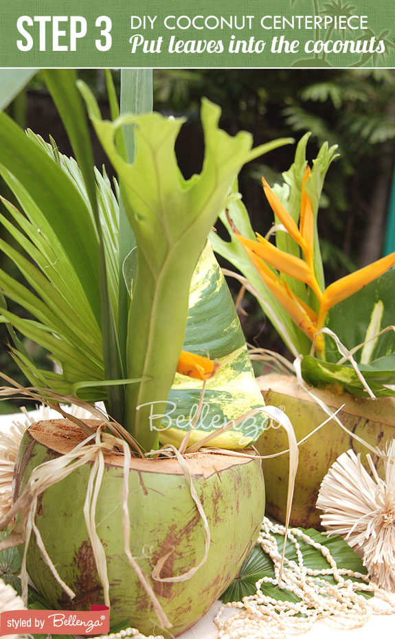 Step 3- Place Leaves into Coconuts | How-to Tropical Centerpiece Using Coconuts | www.bellenza.com