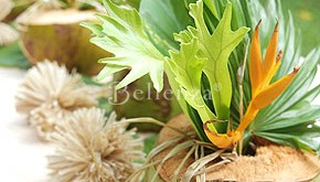 Tropical-inspired beach tablescape with coconuts