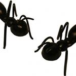 giant prop ants