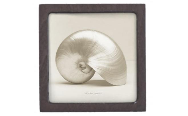 Nautilus shell keepsake box via Zazzle